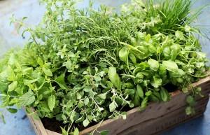 Histamine Fighting Herbs