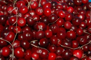 Cranberry Extract Helps with Bladder Infection