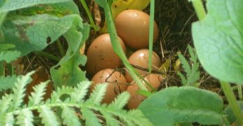 Supercharge Your Mornings With Pastured Eggs