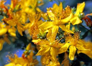 Appealing Herbal Options For Patients With Depression