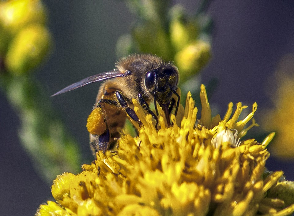 Bee Pollen, A Cure for Cancer
