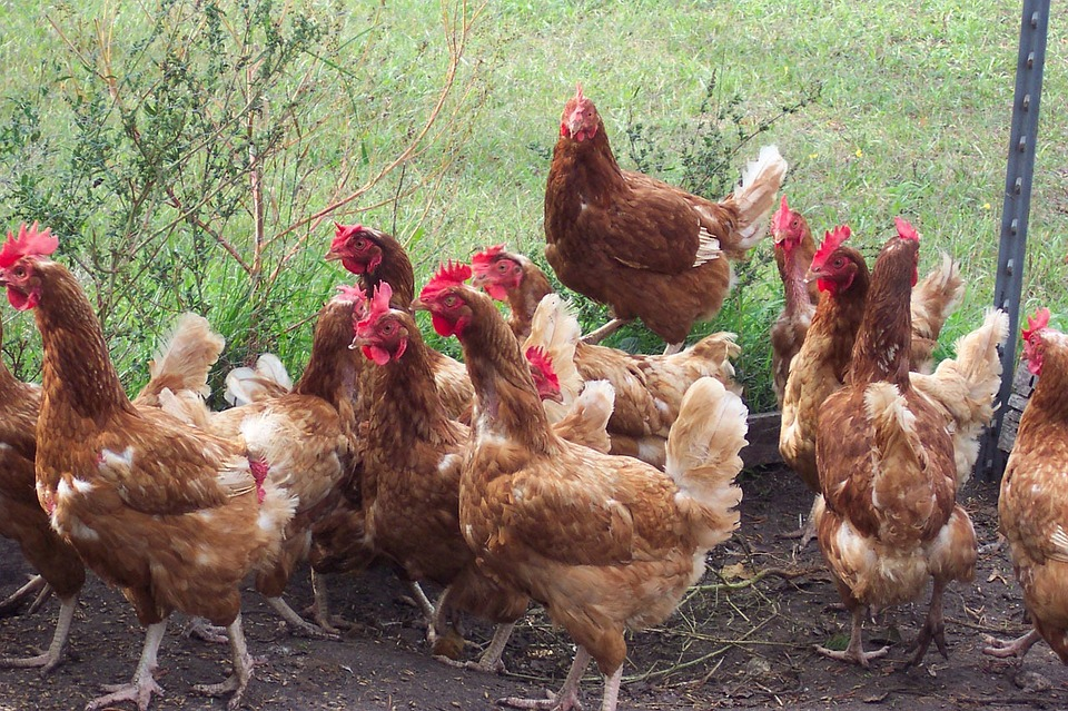 The Latest Bird Flu Update Revealed