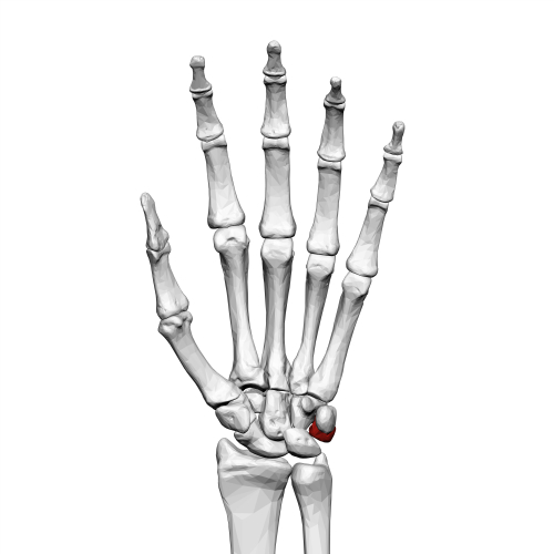 How does Vitamin K Improve Bone Formation?