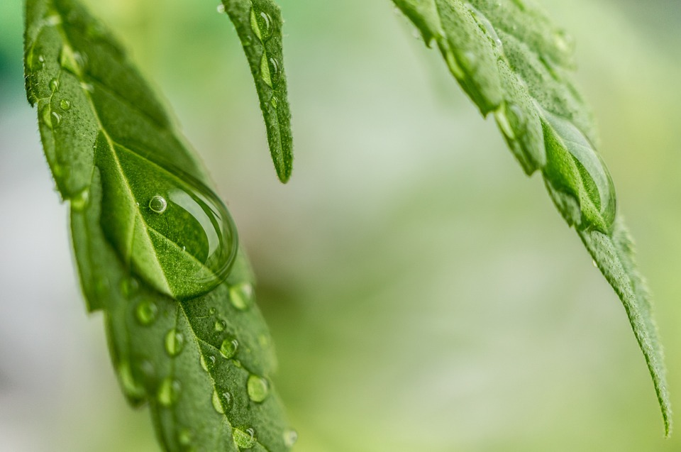 The Important Benefits of CBD You Should Know