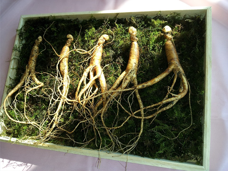 Strengthen your adrenals with ginseng