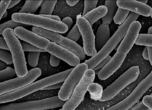 Friendly bacteria helps to improve your digestive system