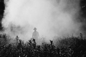 Is There Weed Killer In Our Foods?