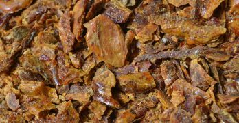 Propolis Is Referred To As Nature's Antibiotic