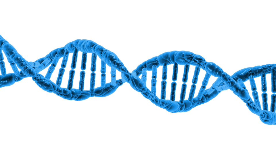 More Vitamin D Equals Longer Telomeres