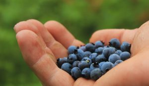 Antioxidants Can Be Quite Important For Your State Of Health