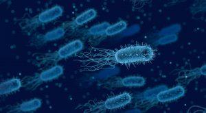 Stop Bacteria With Nature's Antibiotics