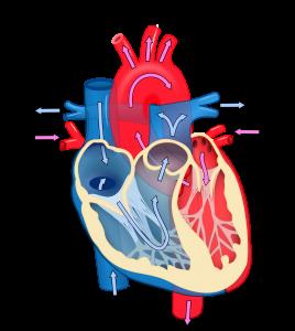 Astaxanthin and Heart Health