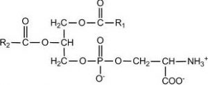 phophatidyl-serine60ct.jpg